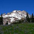 Wildflowers on Mt. Hood by sketchpoet
