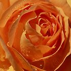Star Inside a Rose with Raindrops by Robert Armendariz