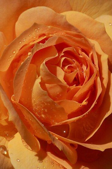 Star Inside a Rose with Raindrops by Robert Armendariz
