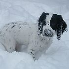 Spaniel In the Snow by Jacqueline Turton