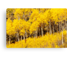 Golden Fall Aspens Canvas Print