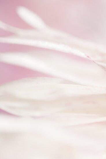 featherlight by ma-fleur-art
