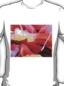 Autumn Glow T-Shirt