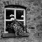 Oldbridge Window by Martina Fagan