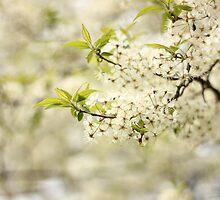 Wild Plum Blossoms by AbigailJoy