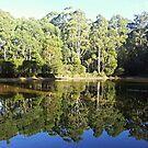 Wombat Forest by dozzam