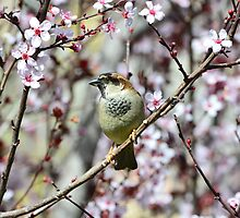 Sparrow in flowers  by Nika Lerman