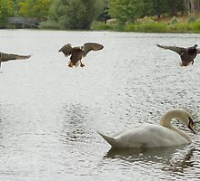 Landing gear down by Theresa Selley