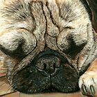 A Pugs Life Pastel by AngelaBishop