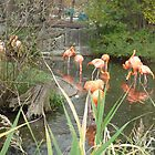 Flamingo Pond by merrychris