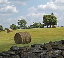 Field of Hay by tonyaleigh