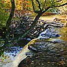 Waterfall at Davies Bridge in Autumn II by Lisa G. Putman