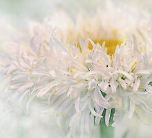 petals by Teresa Pople