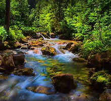 A forest stream. by Dave Hare