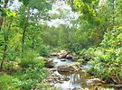 September Arrives At The Unami Creek by MotherNature