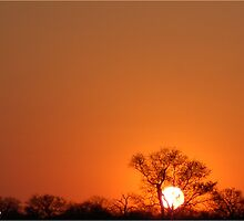 A TYPICAL AFRICAN BUSHVELD SUNSET by Magaret Meintjes