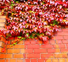 Virginia Creeper On Brick by Fara