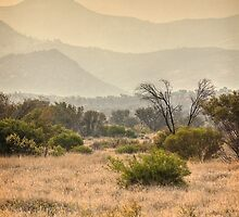 Amata haze by Roger Neal