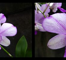 Orchid Panorama from Ubud 01 by Keith Richardson