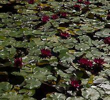 Abundance In Crimson  by Georgia Mizuleva