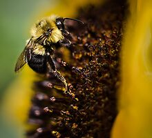 Bees and flowers 9 by Richard Fortier