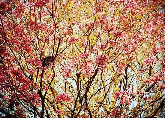 Nesting dreams by Denis Marsili - DDTK