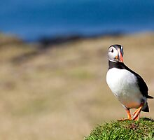 Puffin Standing on One Leg - Scotland Treshnish Isles by Christy Woodrow