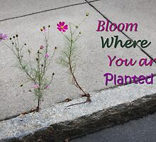 Bloom Where You Are Planted by vvfineartphotog