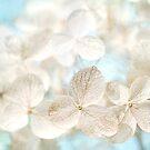 Lacy Hydrangea by Beth Mason