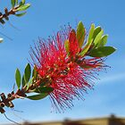 Bottle brush flower by Newstyle