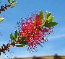 Bottle brush flower by Newstyle