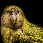 Kakapo - New Zealand by Kimball Chen