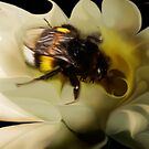 Pollination by Cliff Vestergaard