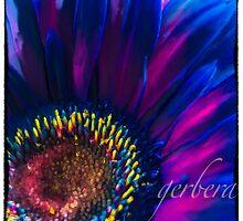 Gerbera In Pink & Blue by Jessica Manelis