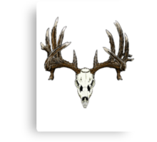 Whitetail deer skull  Canvas Print