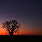 THE BOAB TREE - A KIMBERLEY ICON by Sue  Fellows