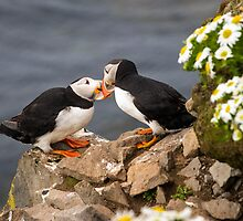 Puffin Beaking by Wei Hao Ho