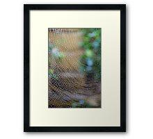 Golden Silk Orb Weaver's Web Design Magic Framed Print