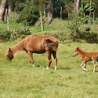 Mare and Colt Grazing by rhamm