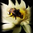 Pollination ipad by Cliff Vestergaard