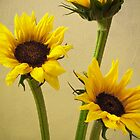 Sunflowers by bgbcreative