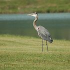 Blue Heron by Mechelep