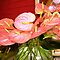 *AVATAR-Anthurium Flower - Gorgeous Flower Cards*