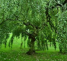 Weeping Willow - London by Jessica Reilly