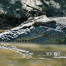 Reflections of a Saltwater Crocodile by Steve Randall
