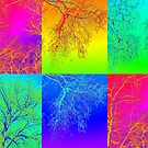 Trees in South Australia - an andy warhol patchwork effect by cathyjacobs