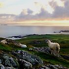 Sheep on Dun I by TJLewisPhoto