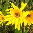 Yellow Flowers by Shulie1