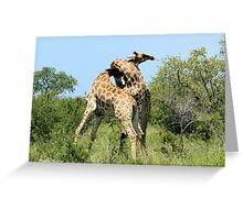 THE SPELL - GIRAFFE - Giraffa camelopardalis - ENCOUNTERS IN MATING SEASON Greeting Card