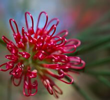 Fireworks in a flower by Trudi Skinn
